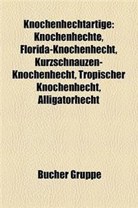Knochenhechtartige: Knochenhechte, Florida-Knochenhecht, Kurzschnauzen-Knochenhecht, Tropischer Knochenhecht, Alligatorhecht