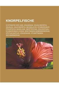 Knorpelfische: Systematik Der Haie, Kragenhai, Squalomorphi, Squalea, Galeomorphi, Neoselachii, Echinorhinus Pfauntschi, Nagelhaie, I