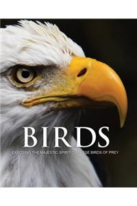 Spirit of Birds of Prey