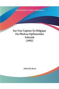 Sur Une Capture En Belgique Du Pholcus Opilionoides Schrank (1892)