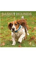 Basset Hounds 2020 Square Foil